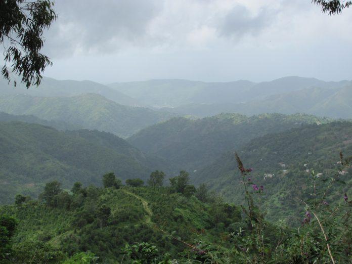 Hike Jamaica Blue Mountains