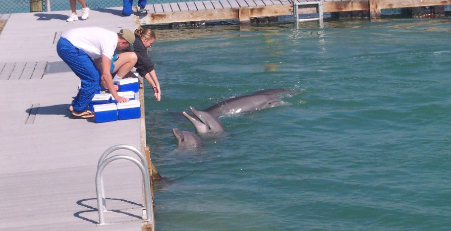 Hawks Cay has its own dolphin research facility, and dolphin encounters are available for all ages - either dockside or in the resort's saltwater lagoon.